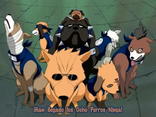 Ninken  Naruto_shipuden_11_3